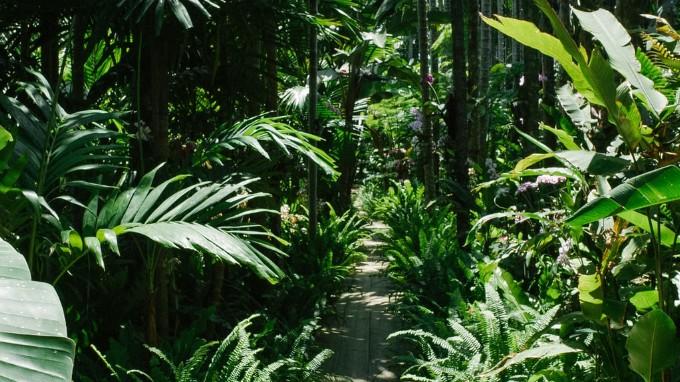 A Plants Nursery